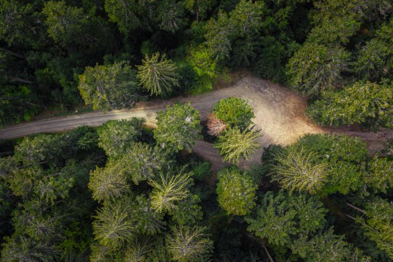 photo aérienne par drone de foret des vosges
